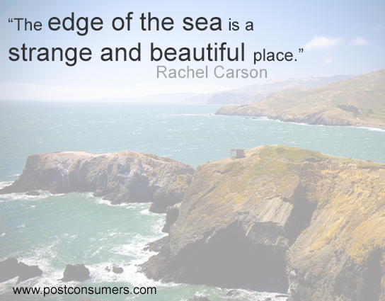 Rachel Carson Quote The Edge Of The Sea Postconsumers Impressive Rachel Carson Quotes
