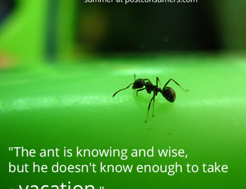 Favorite Summer Quotes: The Failure of Ants