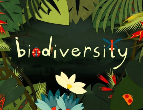 Favorite Biodiversity Quotes: The Past and the Future