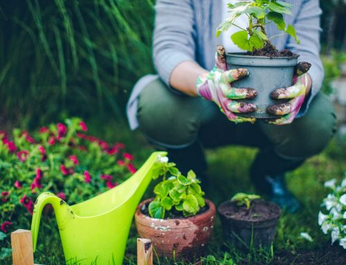Our Favorite Poems About Gardening
